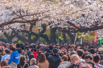 Tokyo, Japan - March 24, 2013: Tokyo Crowd enjoying Cherry blossoms festival in Ueno Park.